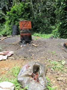 """Artisanal"" palm oil processing -- how squatters make a living"
